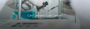 can cannabis cure cancer